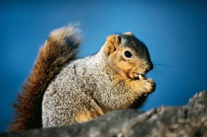 You just don't see sickly squirrels.  Hmmm . . .
