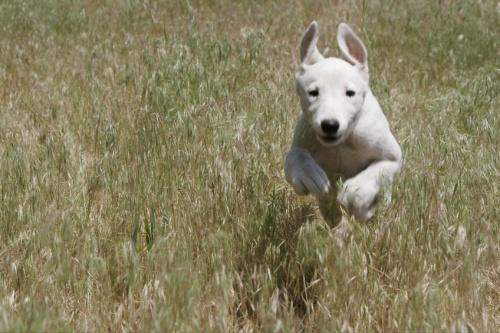 Run, Spot, Run!